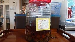 梅酒作り20190616-5 (1).jpg