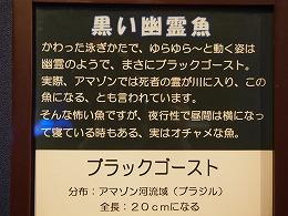 P1010161.jpg